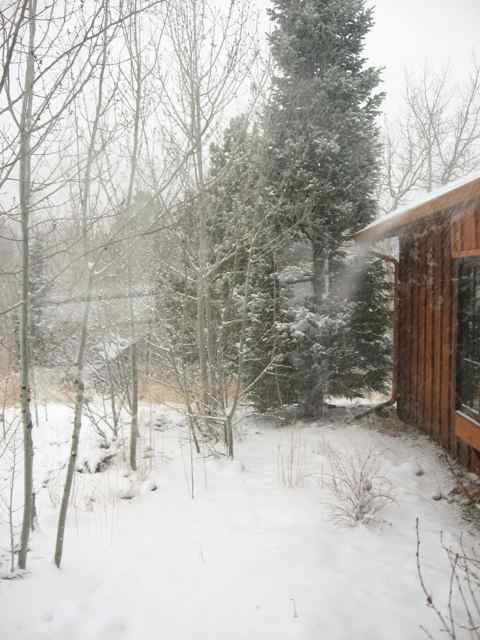 Snow_2203