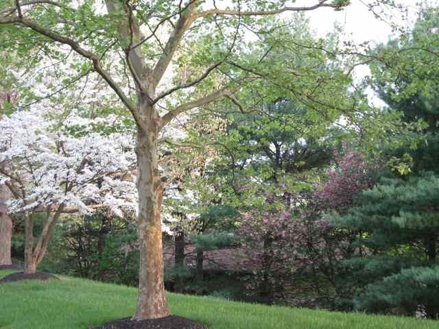 Maryland-trees_2271
