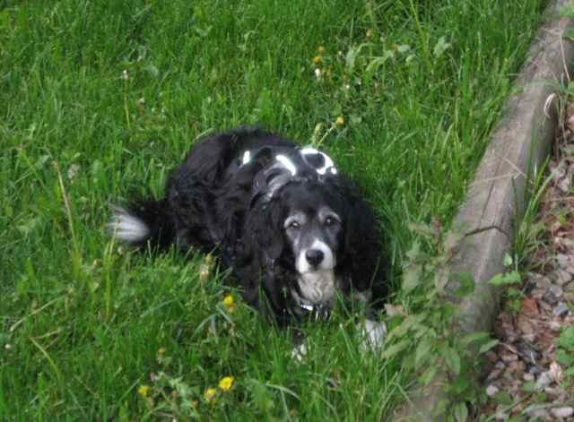 Garden-pup_2411