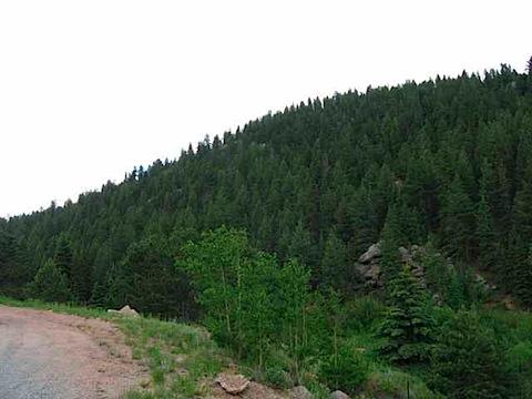trees_2543.jpg