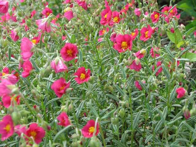 Flowers1_2417