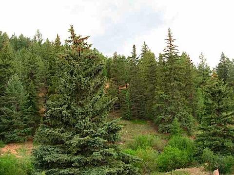 trees_2544.jpg