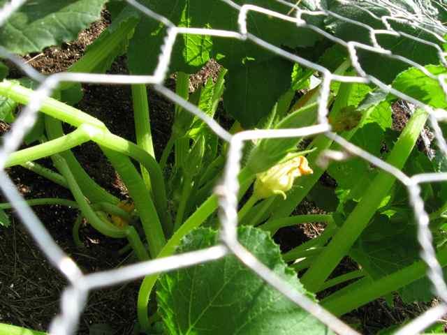 Garden2_3180