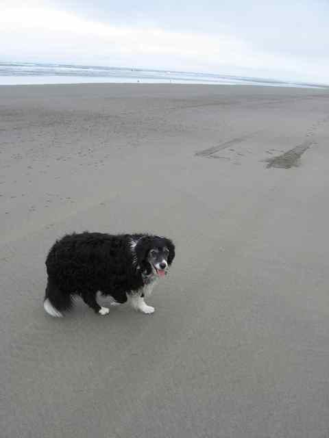 2008-08-20-beach-089