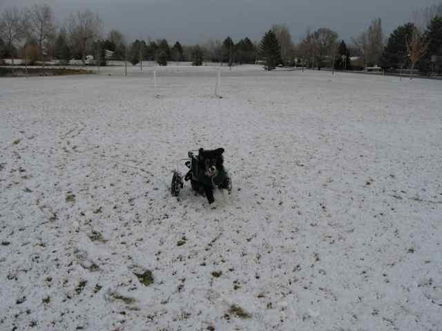 2009-Ari-snow_3395