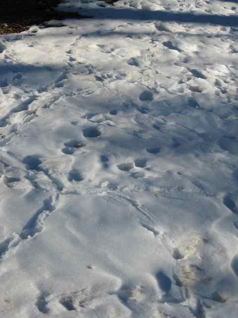 Snow1_3506