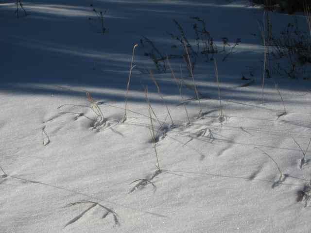 Snow2_3511