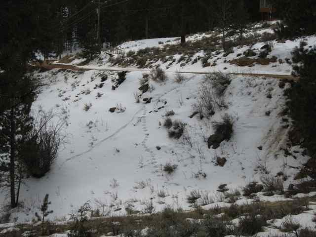 Snow-story1_3544