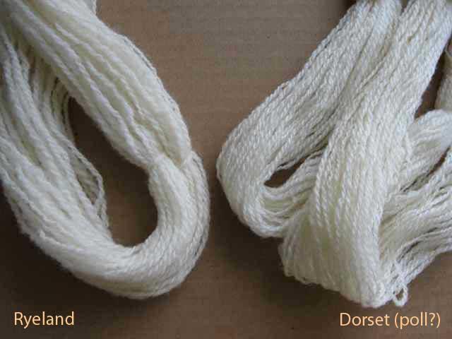 Ryeland-Dorset2_3580