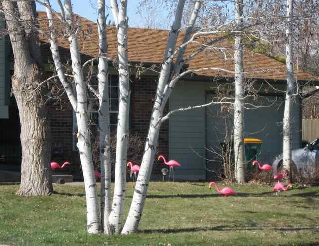 Flamingos_3822