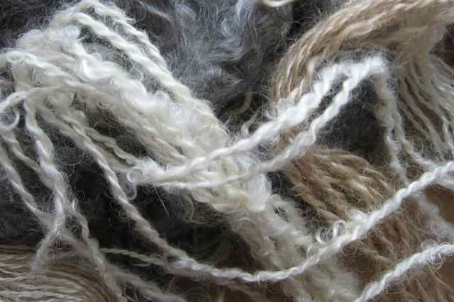 Mohair-yearling_3825_2