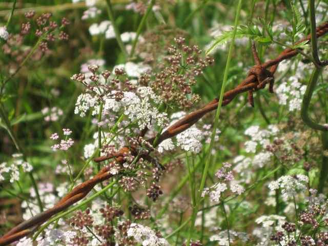 4-flowers_4425