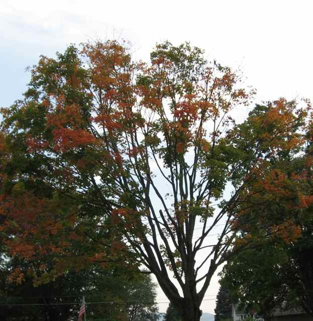 Tree_4970