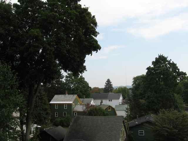 Trees_4974