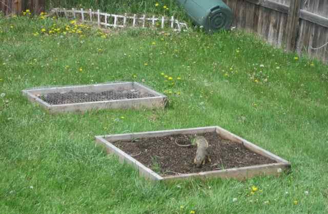 Garden0-5-19_3966