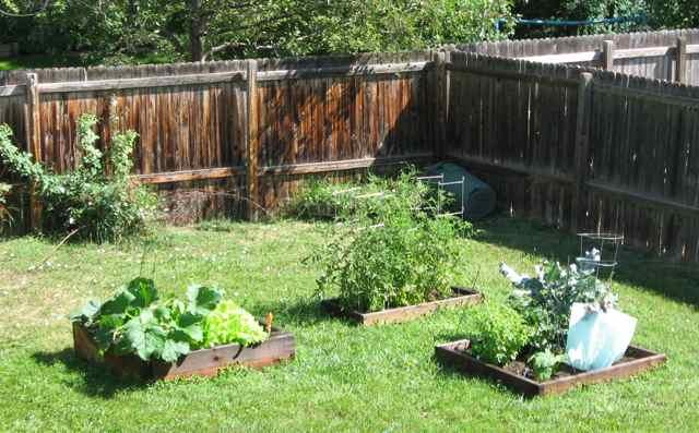 Garden1_7-27-4313