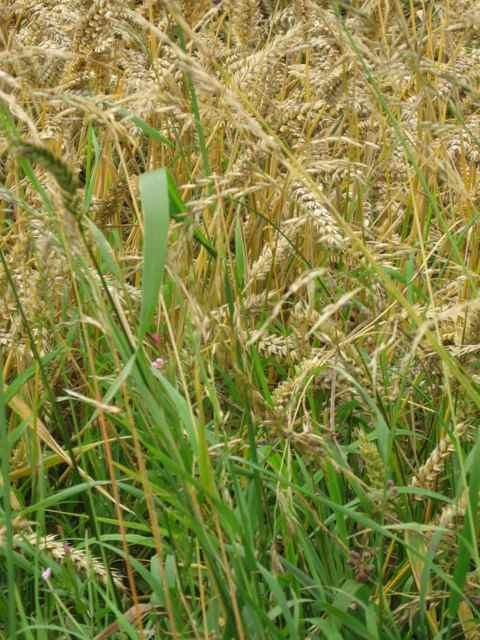2-grass_4397