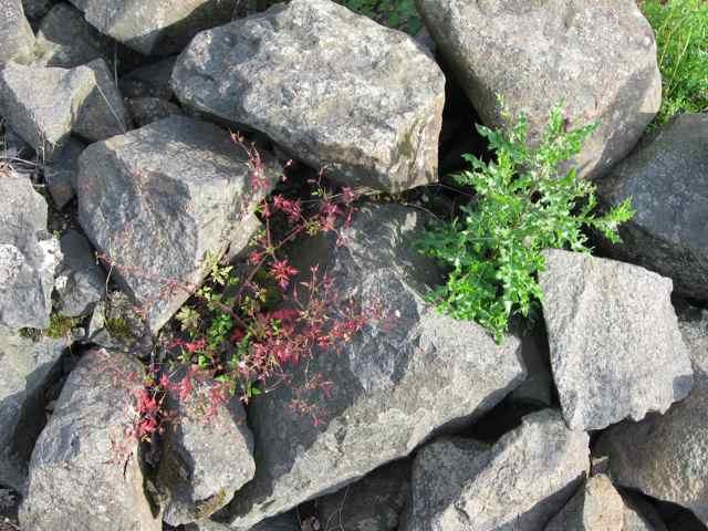 8-rocks_4461