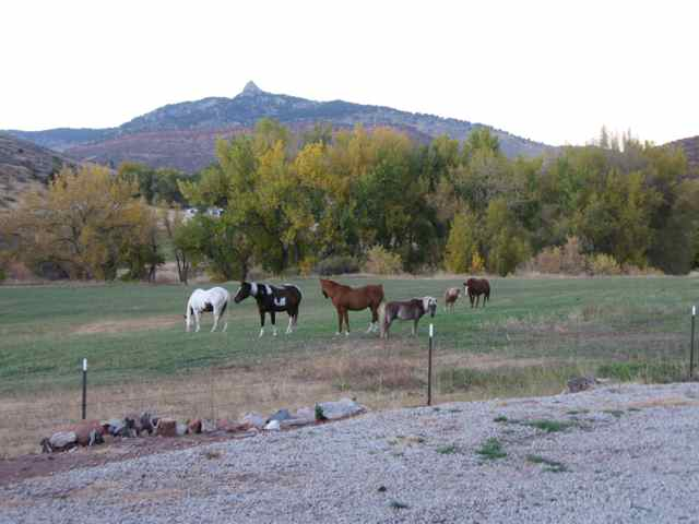 Horses_5041