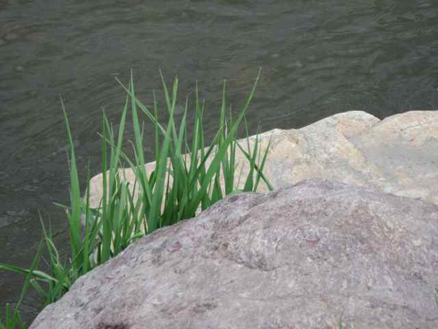 River_6049