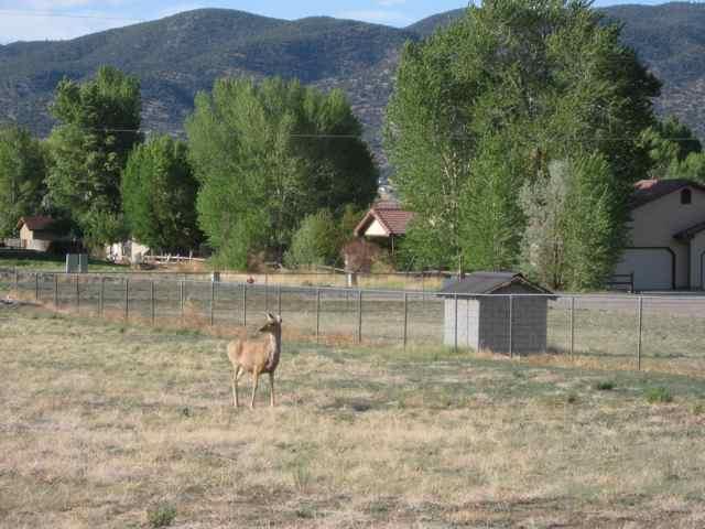 Deer_6073