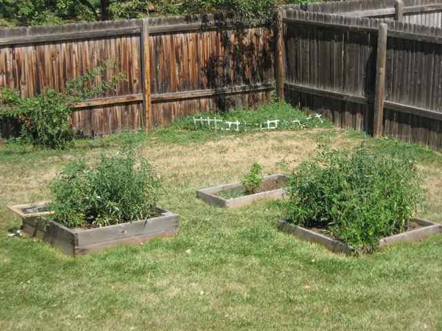 Garden_6620