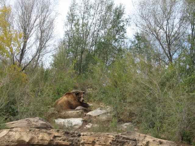 Bear_7001