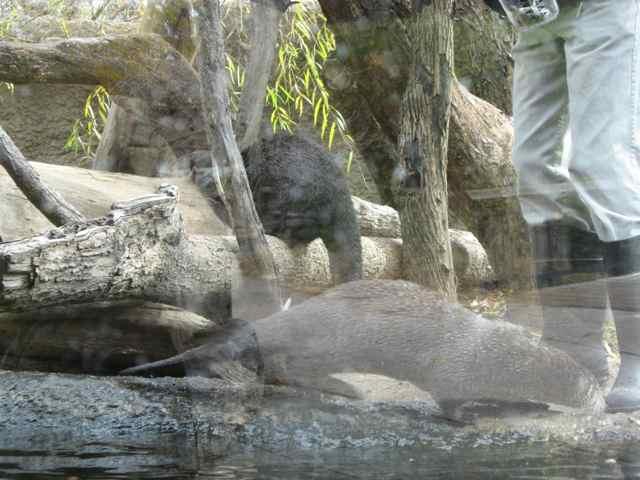 Otters_7002