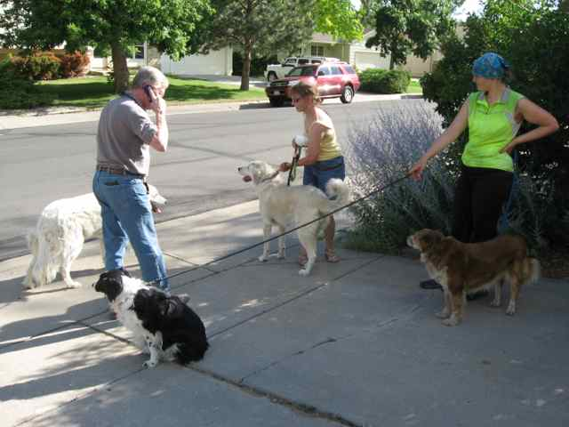 01-Dogs_7966