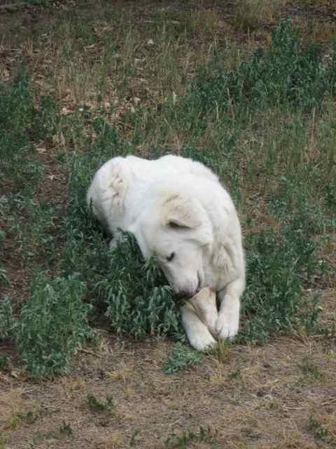 Bear_8123