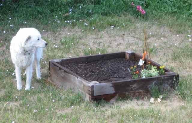 2012-06-20-garden_8011