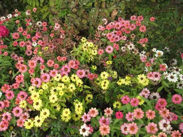44-garden_5724