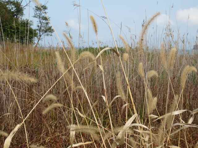 46-grasses_5731