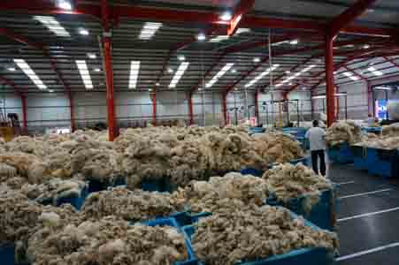 The British Wool Marketing Board, part 1 – The Independent