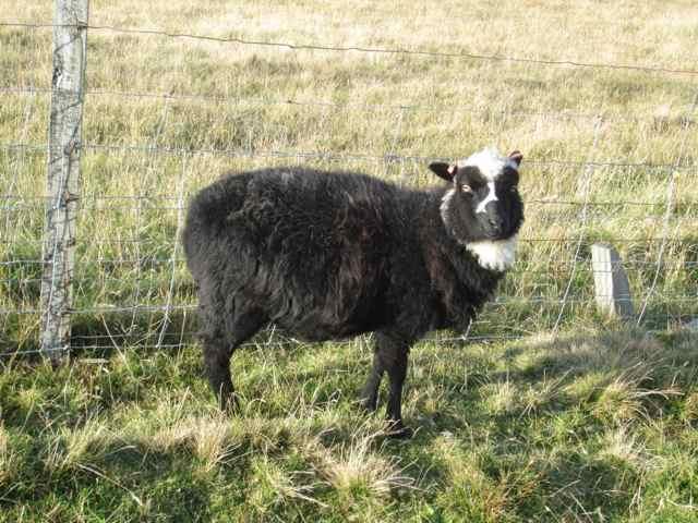 Shetland-October_4822