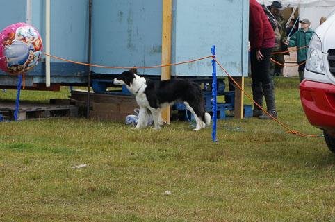 07-dogs-20140813-DSC02022