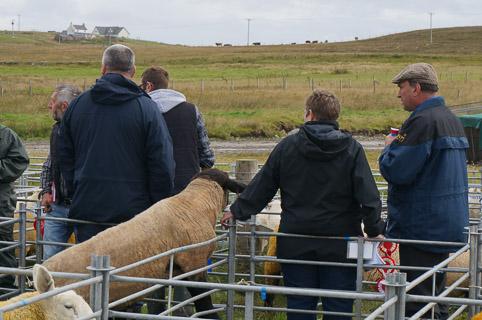 13-sheep-20140813-DSC02162